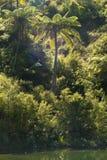 Arbusto nativo na borda dos lagos fotografia de stock