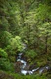 Arbusto nativo, Nova Zelândia fotos de stock