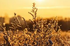 Arbusto nevado Imagenes de archivo