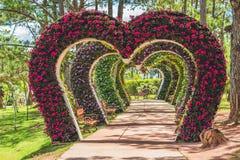 Arbusto no parque, fresco verde da forma do coração imagem de stock royalty free