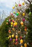 Arbusto pardo con el colgante de los huevos de Pascua en colores vivos Foto de archivo libre de regalías