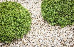 Arbusto pequeno Foto de Stock