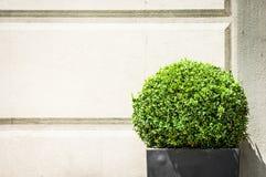 Arbusto pequeno Imagens de Stock