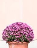 Arbusto pequeno Fotografia de Stock Royalty Free
