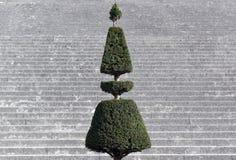 Arbusto podado francês em Versalhes imagem de stock