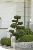 Arbusto podado ornamental Foto de archivo libre de regalías