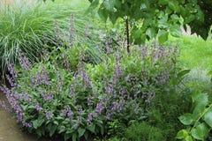 Arbusto prudente no jardim foto de stock royalty free