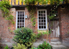 Arbusto que sube en la casa Imagen de archivo libre de regalías