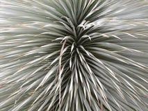 Arbusto Quilled 2 Fotografia de Stock