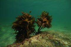 Arbusto s? da alga na parte inferior lisa imagens de stock royalty free
