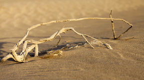Arbusto seco en el desierto en los UAE Fotos de archivo