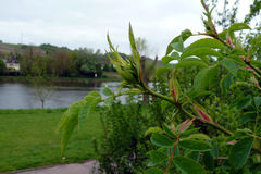 Arbusto selvagem fresco pelo rio na mola fotos de stock royalty free
