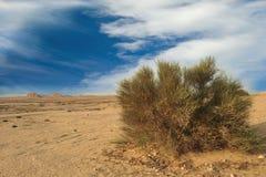 Arbusto selvagem no deserto Foto de Stock