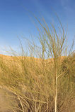 Arbusto selvagem no deserto Imagens de Stock