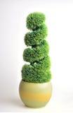 Arbusto sempreverde immagine stock