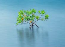 Arbusto solo Fotografía de archivo libre de regalías