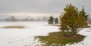 Arbusto solo nel parco di inverno Fotografie Stock Libere da Diritti