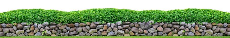 Arbusto sulle pietre Immagini Stock
