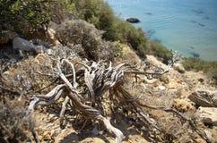 arbusto Sun-secado na costa rochosa do mediterrâneo Fotografia de Stock