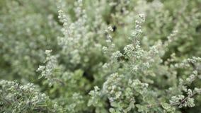 Arbusto verde Imagens de Stock