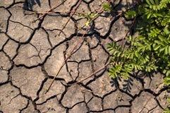 Arbusto verde. Imagen de archivo