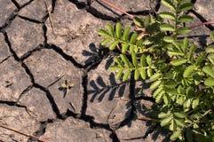 Arbusto verde. Foto de archivo libre de regalías