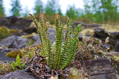 Arbusto verde Foto de archivo