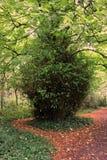 Arbusto verde Fotos de archivo