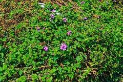 Arbusto verde con flores púrpuras y una bolsa de plástico imagen de archivo