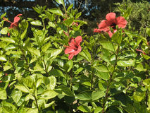 Arbusto verde con las flores anaranjadas imagen de archivo