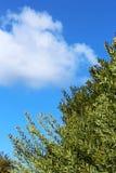 Arbusto verde da árvore e o céu azul Fotografia de Stock