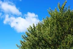 Arbusto verde da árvore e o céu azul Fotografia de Stock Royalty Free