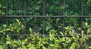 Arbusto verde del árbol con la cerca del metal Imagenes de archivo