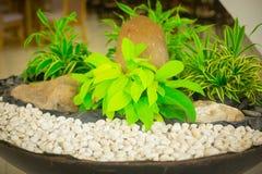 Arbusto verde en las rocas Imagen de archivo