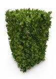 Arbusto verde ilustração do vetor