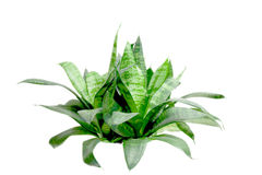 Arbusto verde pequeno imagem de stock royalty free