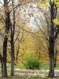 Arbusto verde perto das árvores do outono do ouro Imagem de Stock Royalty Free