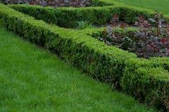 Arbusto verde que ajardina o elemento no parque do verão Fotos de Stock Royalty Free