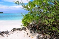 Arbusto verde tropical no Sandy Beach branco e na lagoa azul Fotos de Stock
