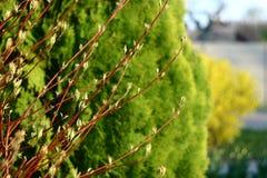 Arbusto: vermelho, verde, amarelo imagem de stock