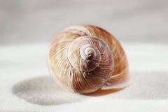 Arbustorum Arianta среднего размера вид улитки земли, иногда известный как улитка рощи, земный pulmonate gastropod стоковое изображение rf