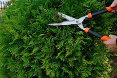 arbustos Foto de archivo libre de regalías