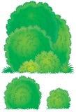 Arbustos Foto de Stock Royalty Free