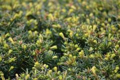 arbustos Fotografia de Stock