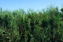 Arbustos Imagem de Stock