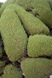 Arbustos aparados poço do jardim Imagem de Stock