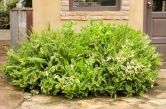 Arbustos bonitos Imagem de Stock Royalty Free