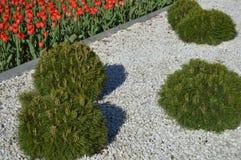Arbustos bonitos e tulipas vermelhas em uma cama no parque imagem de stock royalty free