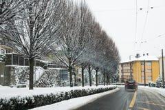 Arbustos com as árvores ao longo da estrada Fotos de Stock Royalty Free