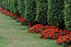 Arbustos como a parede na linha Imagem de Stock